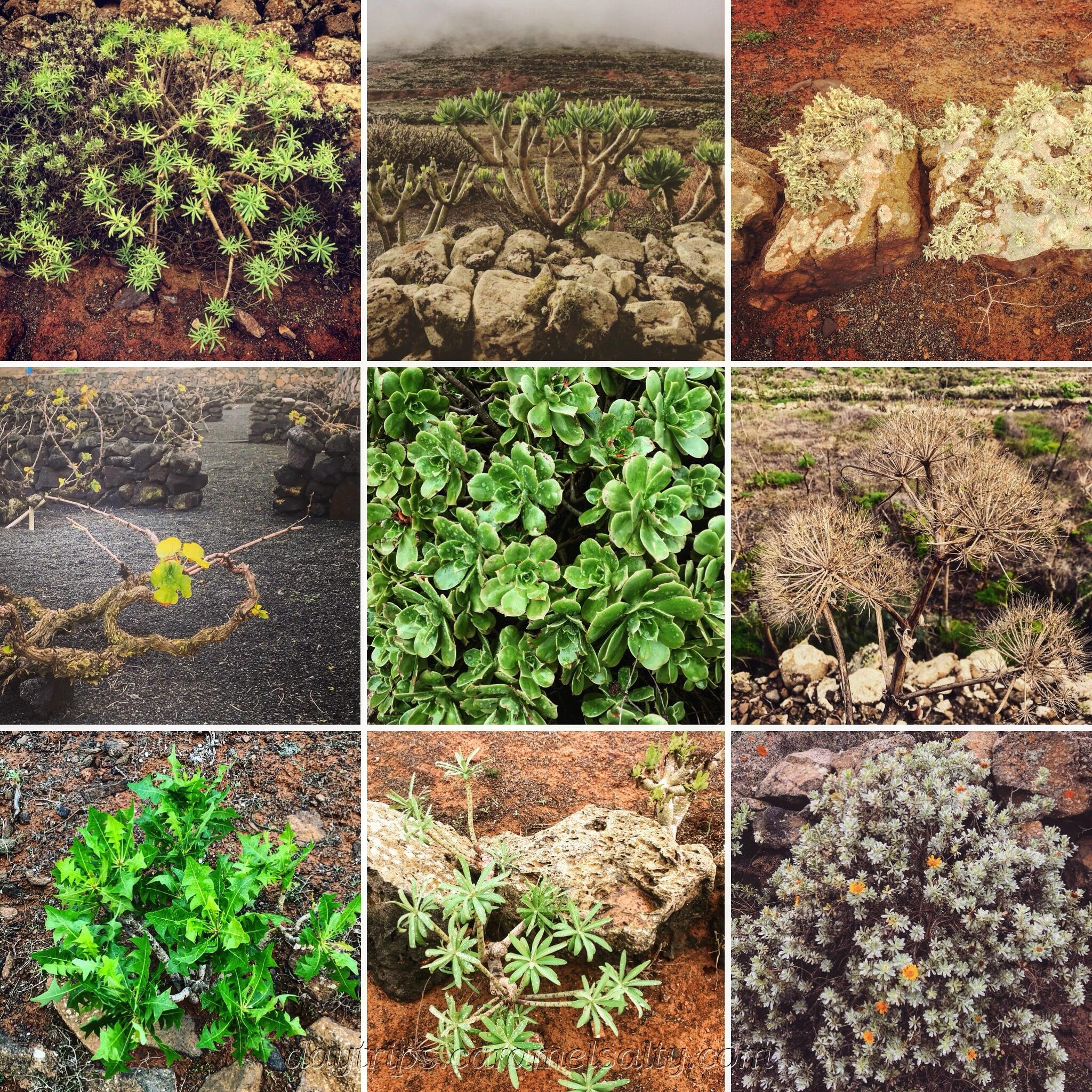 Montage of Plants