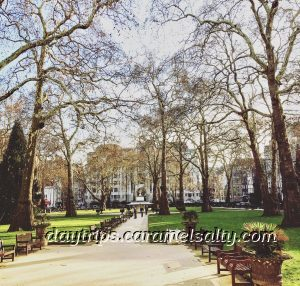 Berkeley Square Has The Oldest Plane Trees in London