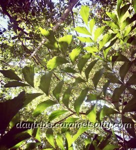 Rainforest in Darwin