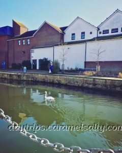 A Swan Along the River Lea, Along Folly Island