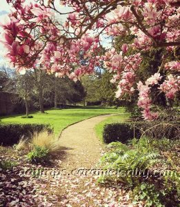 Pink Magnolias and Borders at Osterley Park