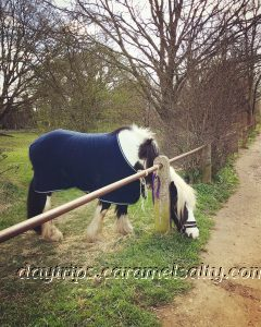 A Tethered Horse on Osterley Lane