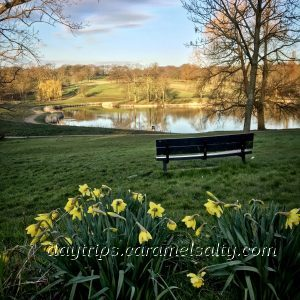 Daffodils, Lakes and Heath and Hampstead Heath
