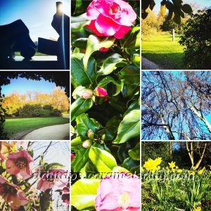 A Photo Montage of Kenwood House Gardens