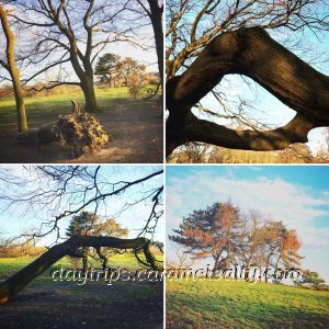 A Montage of Trees Around Hampstead Heath
