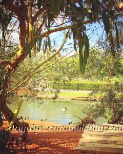 Ducks and Trees at Barnes Wetland Centres