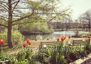 Barnes Duck Pond