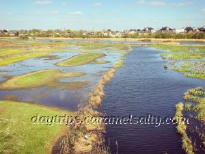 View of Barnes Wetland Centre From The Peacock Tower