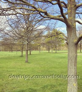 Trees in Hyde Park