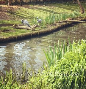 Barnes Wetland Centre