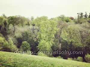 Mature Trees Surround Cliveden