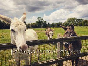 The Retired Donkeys On King's John Playing Fields, Eltham