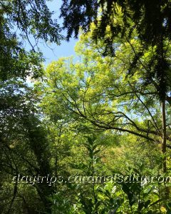 Many Shades Of Green In Hughenden's Woods