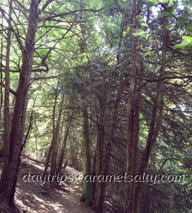The German Forest Walk Along The Purple Route