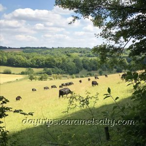 Cows Grazing In The Hughenden Valley
