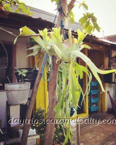 Orchid in Kampong Jugoyudan