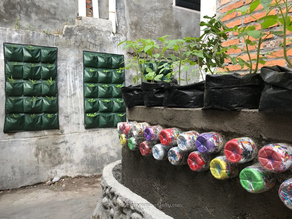 An Improvised Market Garden in Kampong Jugoyudan