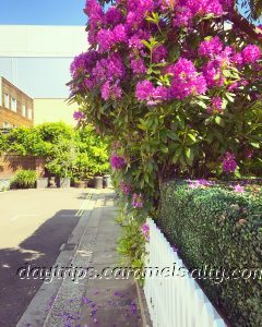 Shepherds Bush Place in the Summer