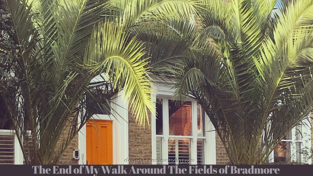 Palm Trees on Rosedale Terrace