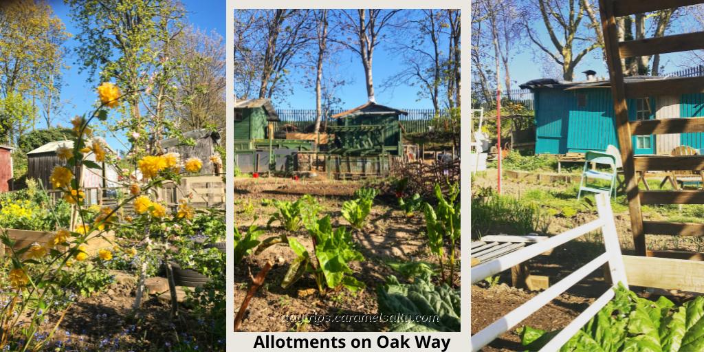 Allotments on Oak Way, Acton Vale