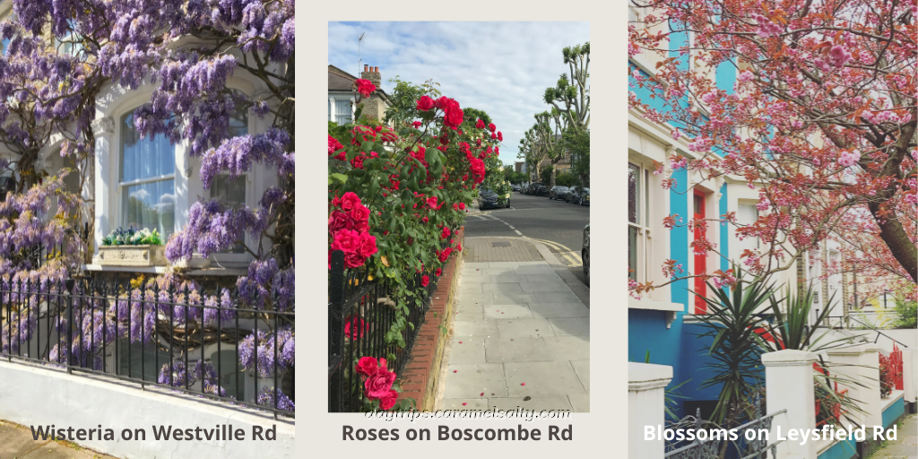 Wisteria on Westville Road, Roses on Boscombe Road and Blossoms on Leysfield Road